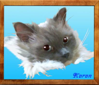 m_koron1-1025.jpg